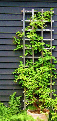 Шпалера для Вьющихся Растений — как сделать своими руками
