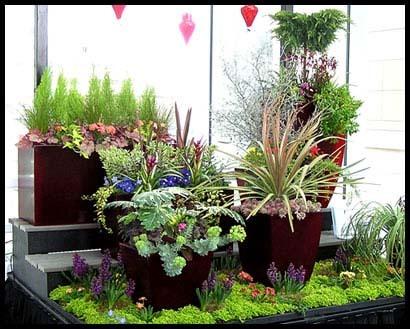 Пример размещения кадочных растений