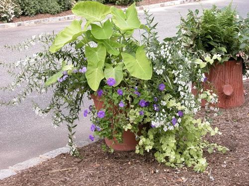 Контейнеры для садовых растений в форме пенька