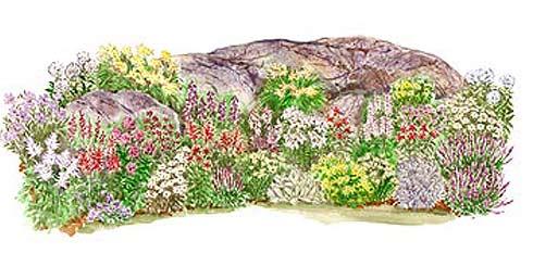 Растения для альпийской горки как