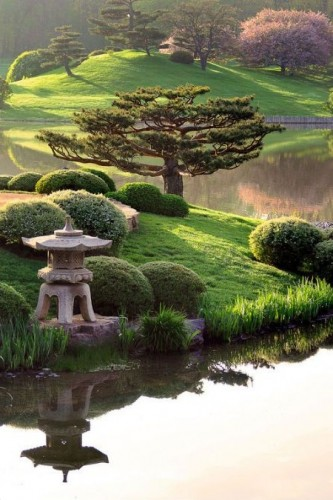 Деревья в японском саду
