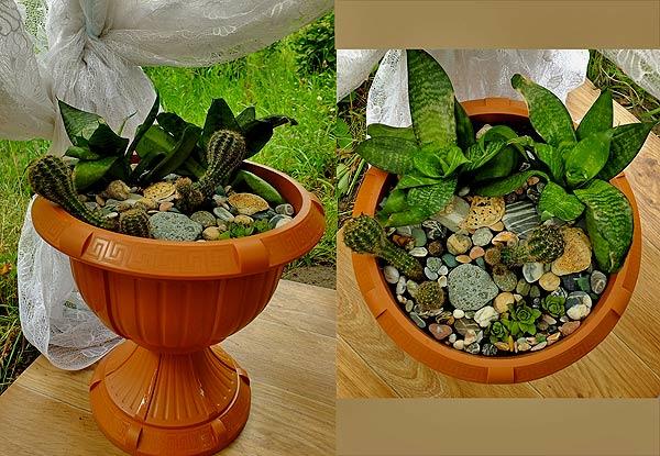 кактусовый сад в плошке