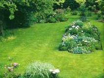 Как посеять газон