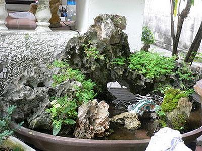 дерево бонсай фото 3