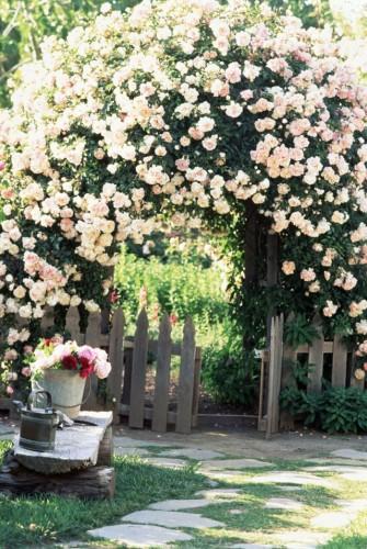 Арка с плетистой розой