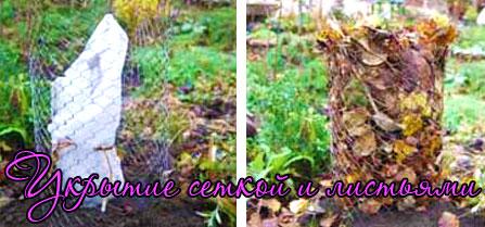 Укрытие роз на зиму сеткой с листьями