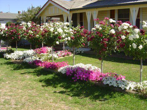 Штамбовые розы перед входом в дом