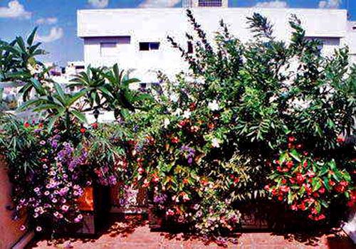 цветы на балконе фото 2
