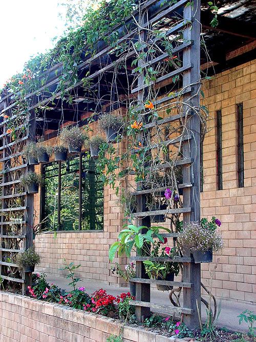 ампельные растения фото 8