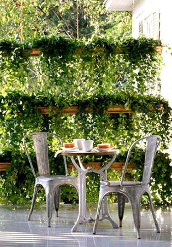ампельные растения фото 3