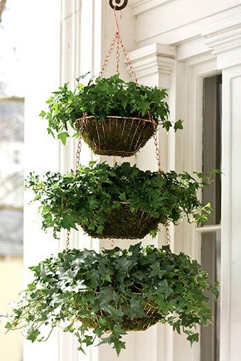 ампельные растения фото 5