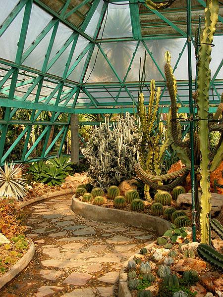 кактусовый сад фото 8