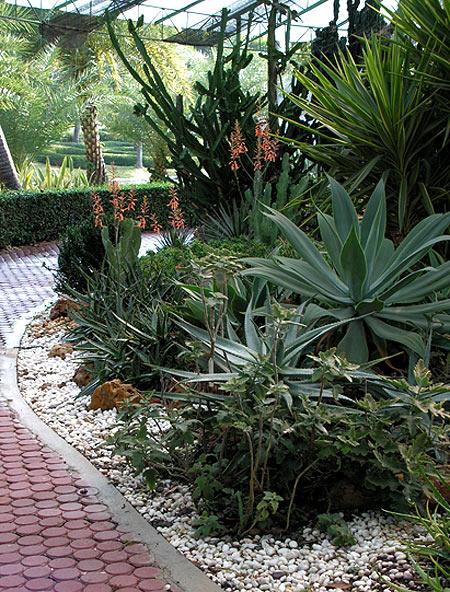 кактусовый сад фото 9