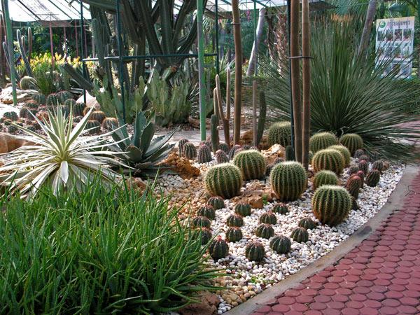 композиция из кактусов фото 5