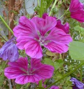 Посадка цветов на клумбе