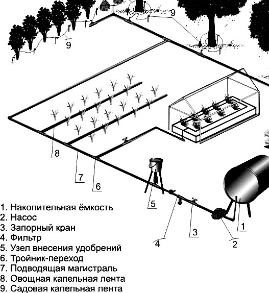 Схема организации капельного полива