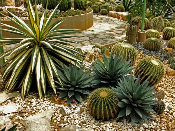 кактусовый сад фото