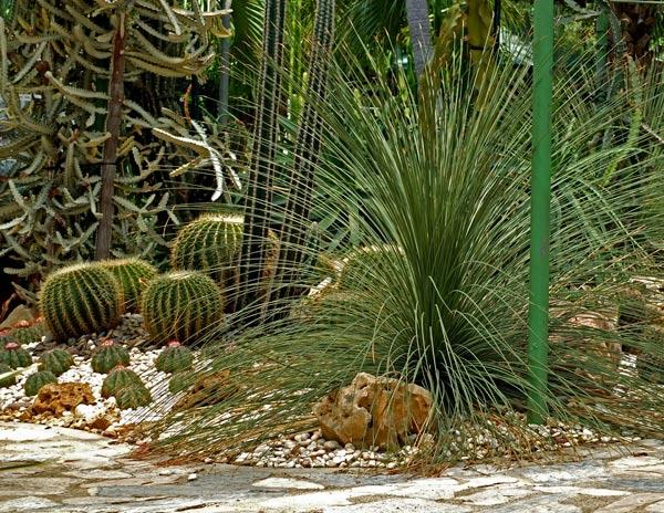 кактусовый сад фото 2