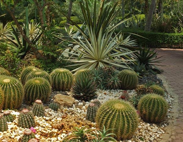 композиция из кактусов фото 3
