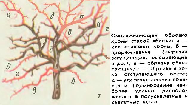 Схема мелкий рисунок