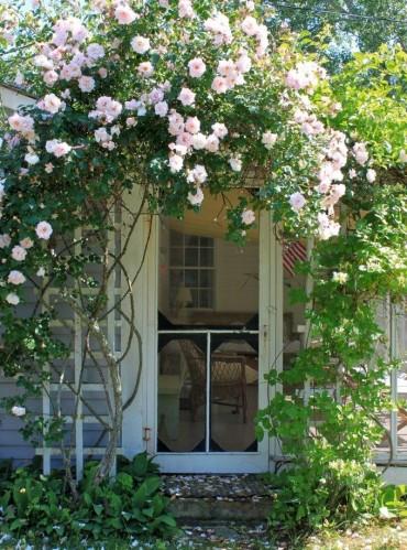 Плетистая роза в декоре крыльца
