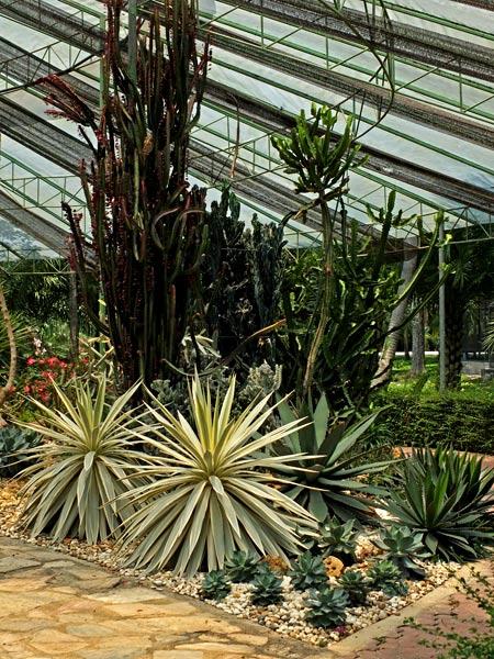 кактусовый сад фото 5