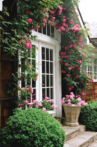 Крыльцо дома увитое плетистой розой