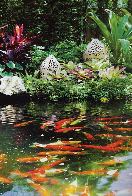 пруд с рыбками фото