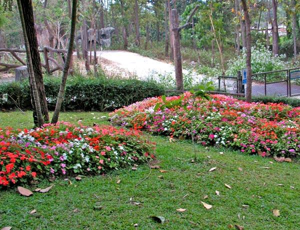 газон и цветущие клумбы