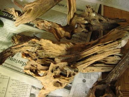 сухое дерево в декоре