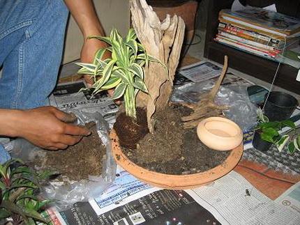 миниатюрный сад в плошке