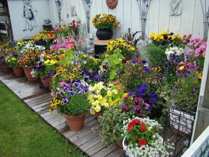 Украшаем двор растениями в кадках