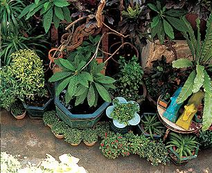 украшаем двор цветами