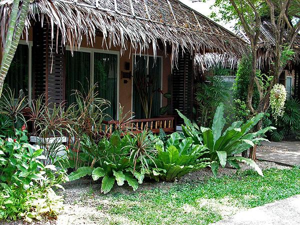 палисадник с широколиственными растениями
