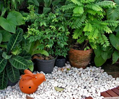 новые идеи для сада и огорода 18