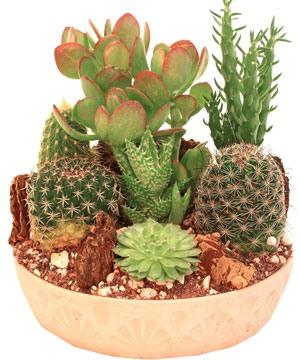 Стильная композиция из кактусов