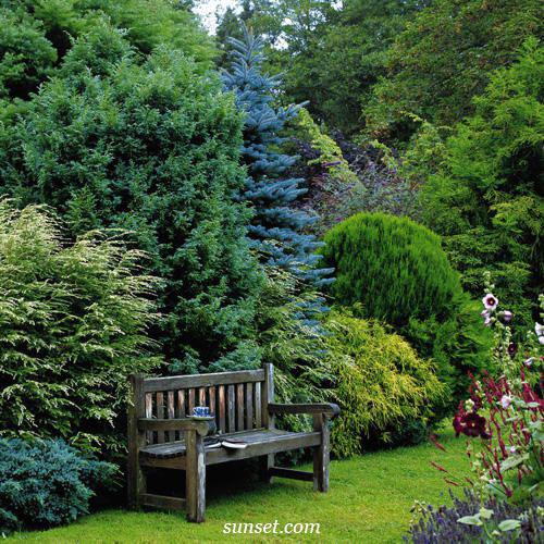 Красивый хвойный сад на даче