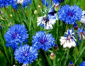 Садовые цветы и растения. 117