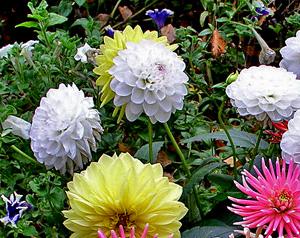 Садовые цветы и растения. 125