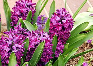 Садовые цветы и растения. 137