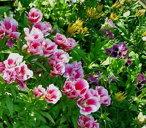Садовые цветы и растения. 145
