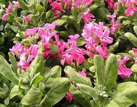 Садовые цветы и растения. 164