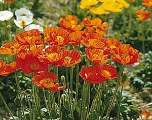 Садовые цветы и растения. 205