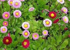 Садовые цветы и растения. 217