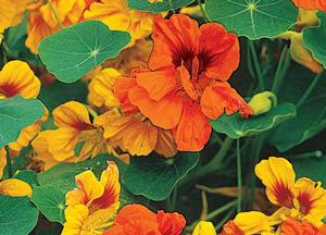 Садовые цветы и растения. 244