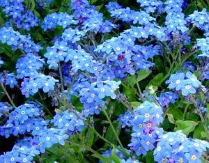 Садовые цветы и растения. 254
