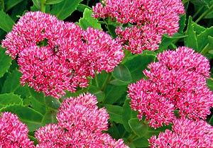 Садовые цветы и растения. 263
