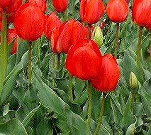 Садовые цветы и растения. 311