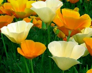 Садовые цветы и растения. 351
