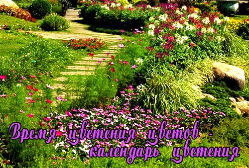 Время цветения садовых цветов - календарь цветения